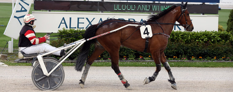Auckland Trotting Club – 7 October 2016