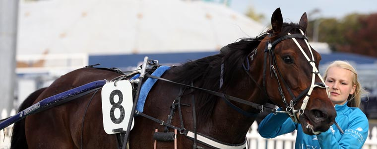 Auckland Trotting Club – 4 November 2016