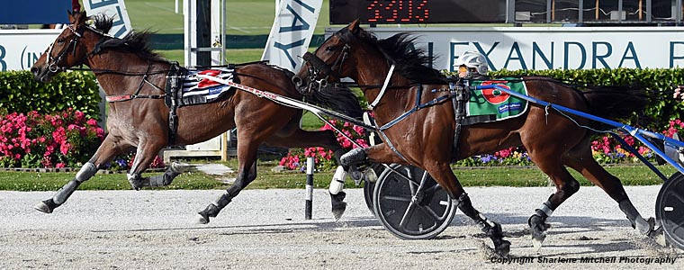 Auckland Trotting Club – 23 November 2018