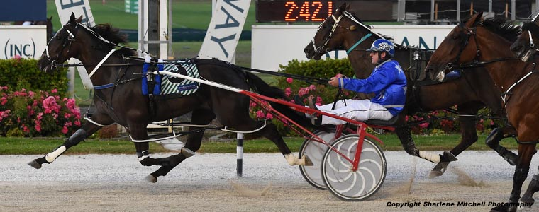 Auckland Trotting Club – 15 February 2019
