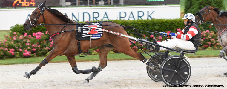 Auckland Trotting Club – 22 February 2019