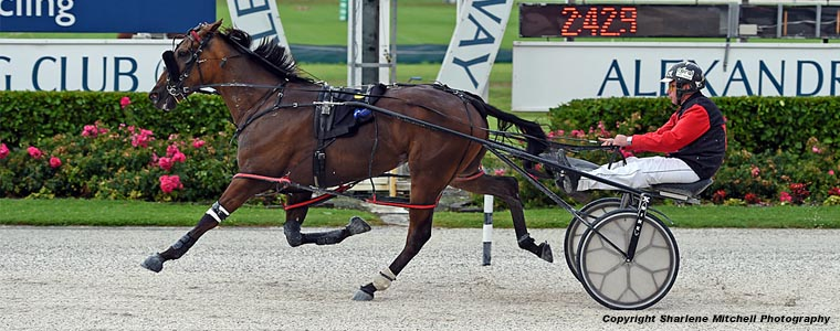 Auckland Trotting Club – 8 March 2019